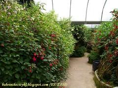 ch - cv shrubs01
