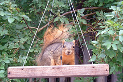 morning squirrel