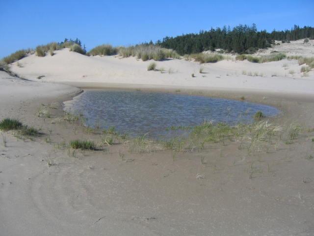 Flooded Dune