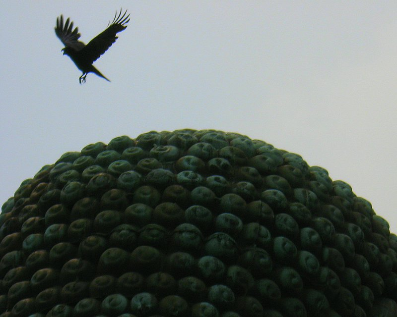 A raven flying off the Buddha's head
