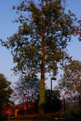 Psychadelic Trees