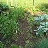 My JP garden