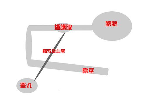 解剖相關位置簡圖