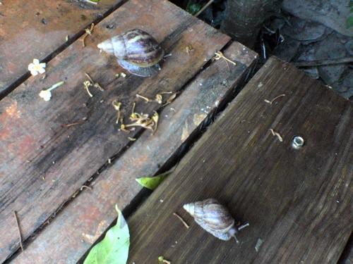 Taiwanese escargots