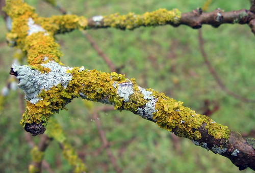 lovely lichen2