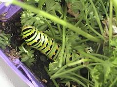 Caterpillar Jungle