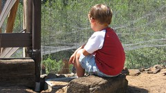 boy watching the chickens watching the boy