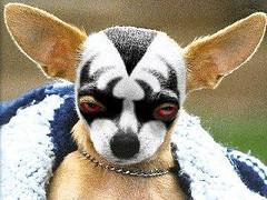 Dog Gene