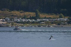 Whale Tail and Alder Bay