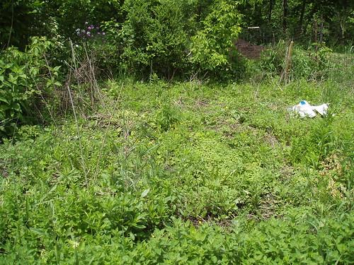 Garden Plot I