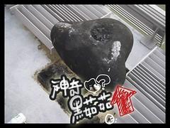 2006-06-04神奇黑菇菇