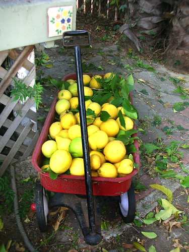 lemon cart