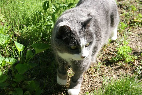 GreyKitty Outside!