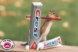 Squirrel brushing teeth?