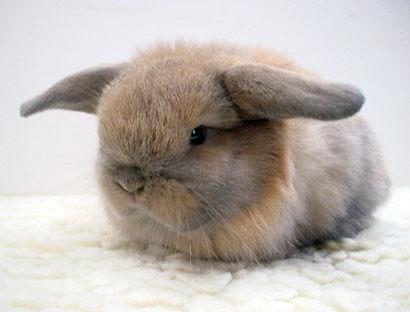 bunny overlord