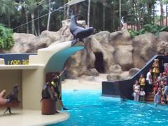 Los leones marinos