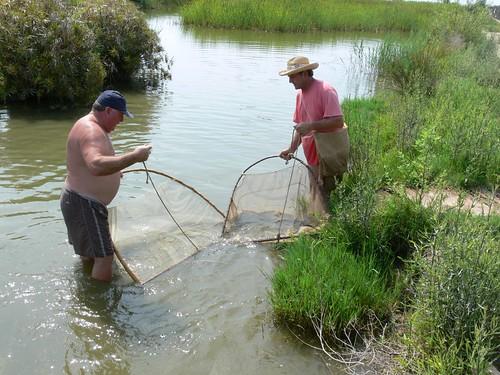 pesca amb gamber