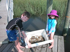 Cooler of Crabs