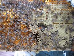 Beekeeping 2069
