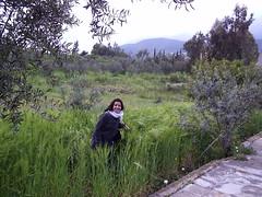 في طريق العودة إلى حِمص