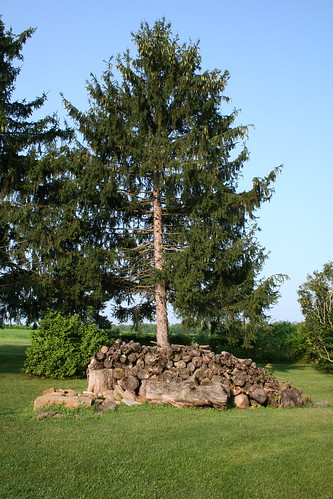 Tree and woodpile