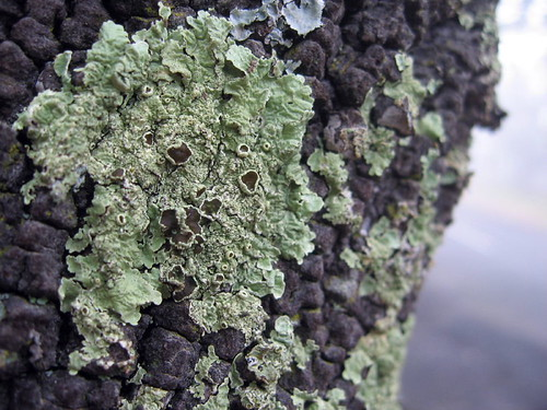 lovely lichen1