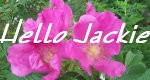 Hello Jackie