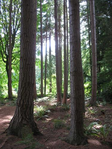 3 woods 1
