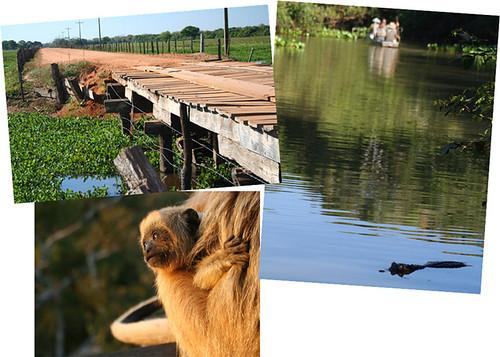 pantanal-norte