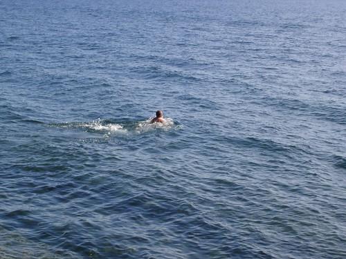 моржи \ swimmers