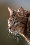 Cat picture, by Nurgles with Nikon D70s and Nikkor 300mm f/2.8 VR lens