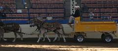 Murphy's Mules