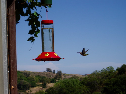 hummingbird in the canyon