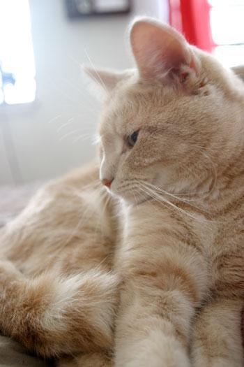 Briscoe cuddling