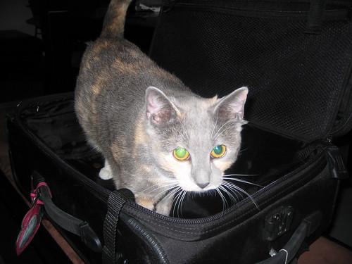 madeleine in suitcase