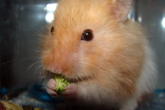 Ami Eats His Broccoli