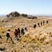 Randonnée au Cerro El Gigantillo (San Luis) avec Inti Anti
