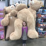 Just a small teddy<br/>10 Oct 2015
