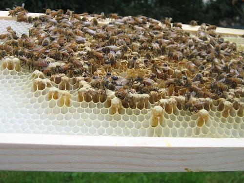 Beekeeping 2006 157