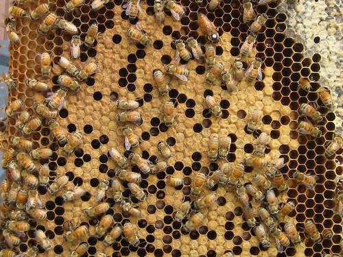 Beekeeping 2006 191