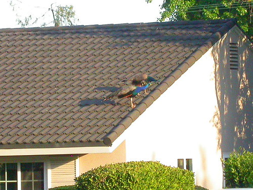 別把人家屋頂踩壞了
