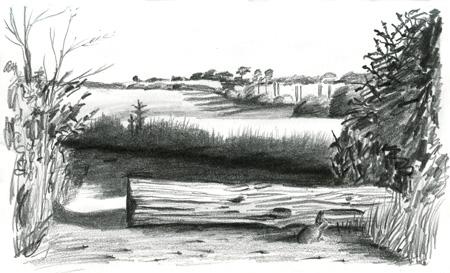 Tree Log Drawing Log
