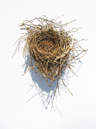 Bird's nest found