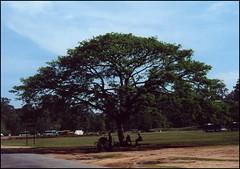 AngkorTom