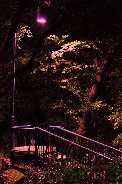 闇夜の小道
