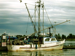 fishermen boat in steveson