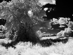 Infrared vision, Passmore Avenue (abandoned), 06