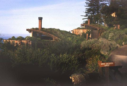 green roof, habitat, rana creek, restoration ecology, living