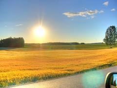 Auringonlasku pellolla