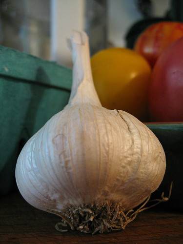 hard-neck garlic